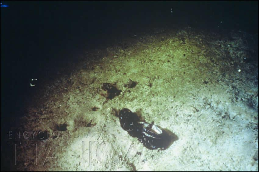 Shoe in Titanic debris field
